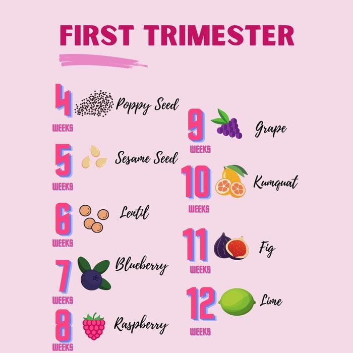 Breakdown pregnancy trimester How To